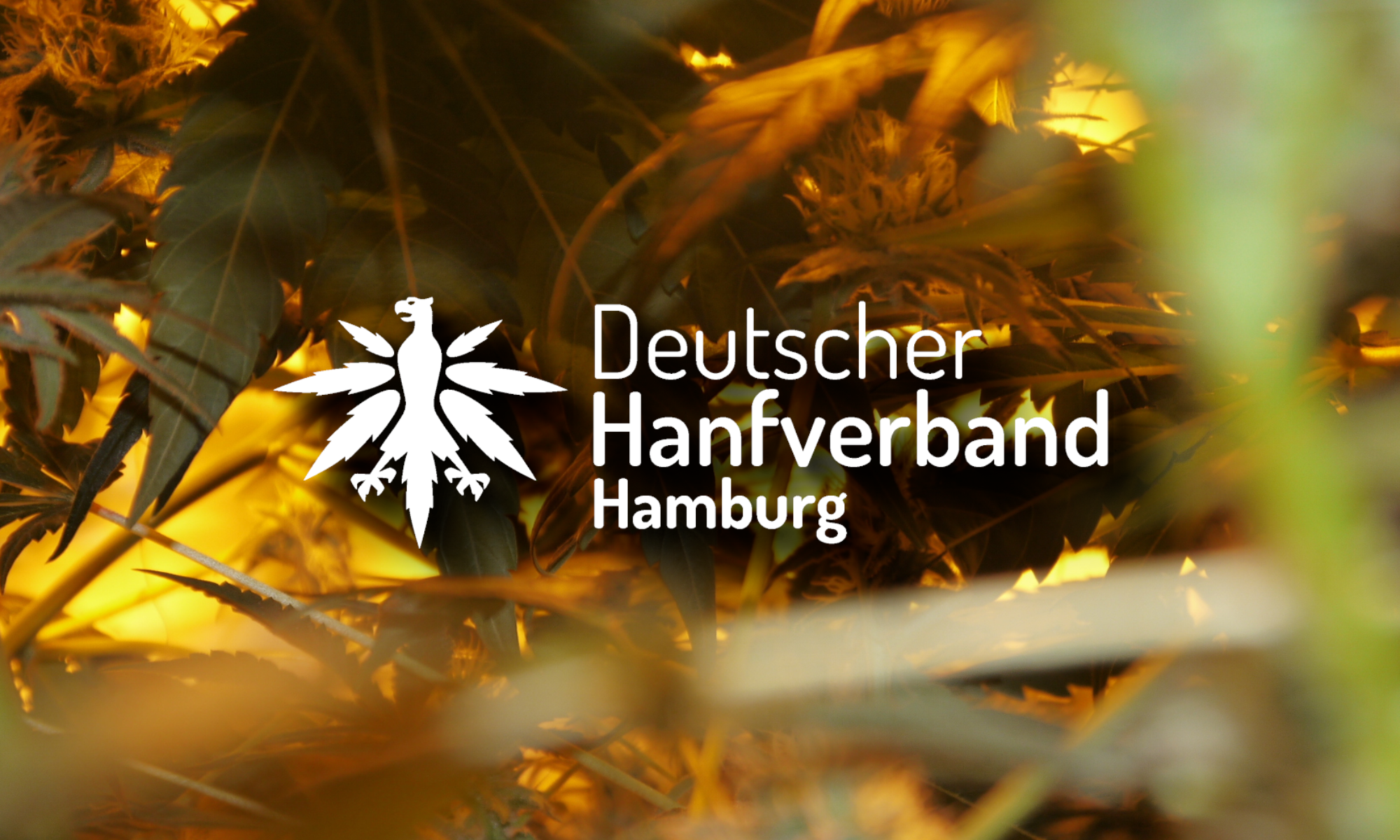 Hanfverband Hamburg
